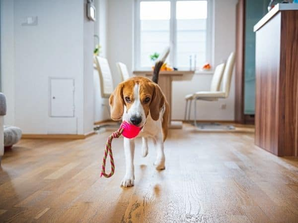 The Barmy Beagle Best Products