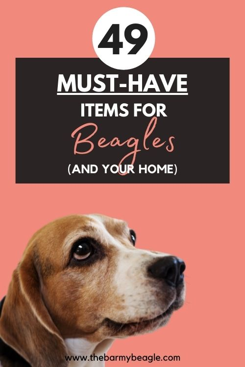49 essential items for a beagle and home