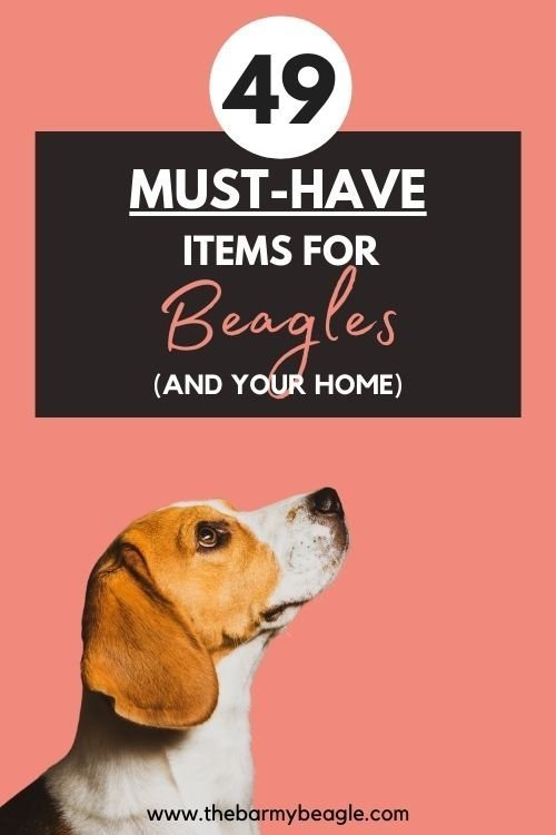 49 essential items for a beagle and your home pin
