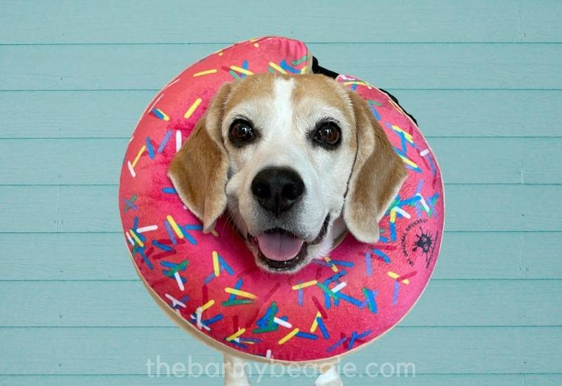 best inflatable collars donut pink blue