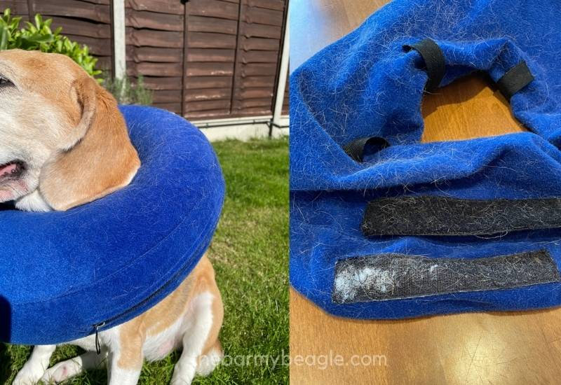 issues with blue inflatable collars for beagles