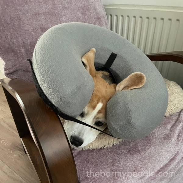 issues with inflatable collars for dogs
