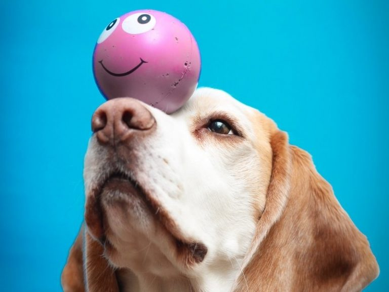 ways to keep your beagle mentally stimulated and entertained
