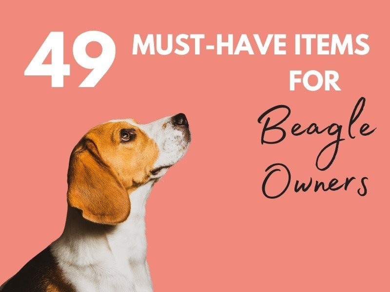 49 essential items for a beagle and your home