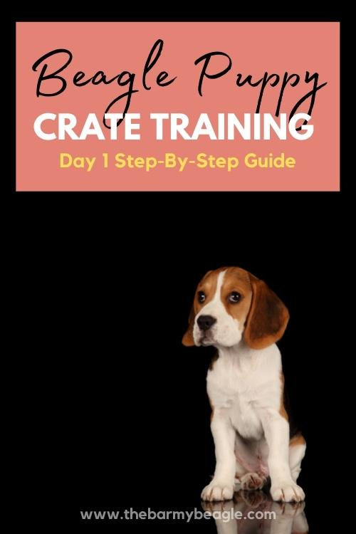 beagle puppy crate training guide pin