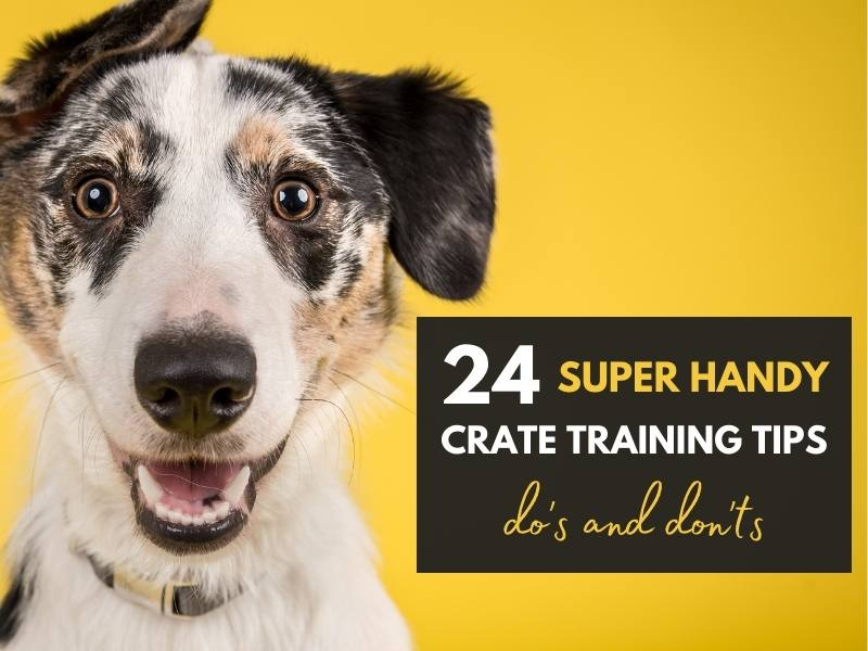 24 handy crate training tips dos and donts