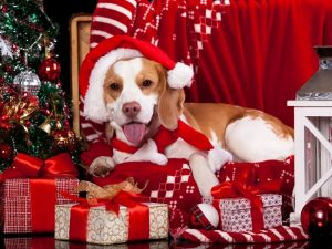 christmas gifts for a beagle