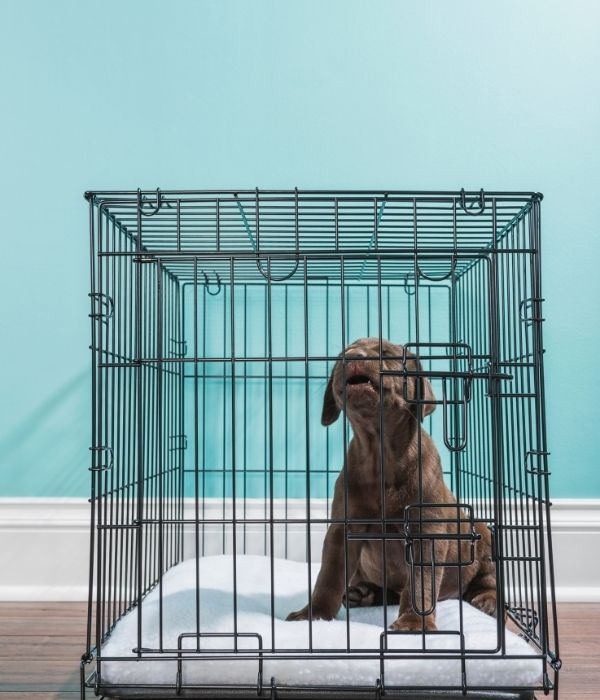 crate training dog whining