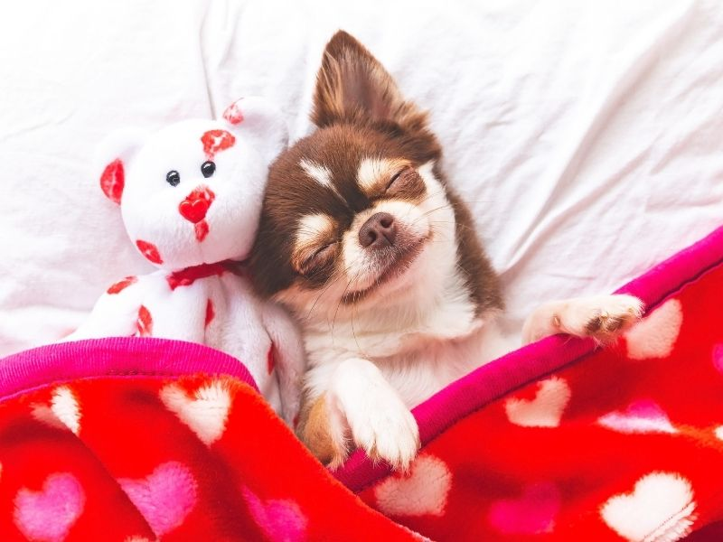 crate training tips dogs sleeping in your bed